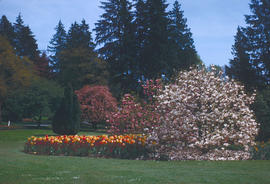 Gardens - Canada : tulips and magnolias, Stanley Park