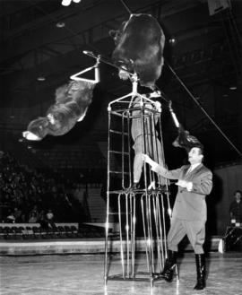 Trained bears in Moscow Circus performance