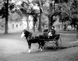 [Two children with dogs in horse-drawn carriage in Plainfield, New Jersey]