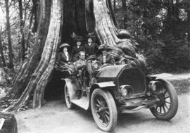 [Harry Hooper in his sightseeing car in front of the Hollow Tree]
