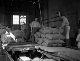 Last cargo of raw sugar in bags: moving bags on carts in refinery