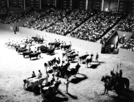 Livestock competition in Agrodome