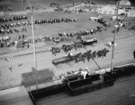 [Vancouver Exhibition livestock and horse team competition in progress]