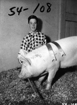 Boy with prize pig in pen