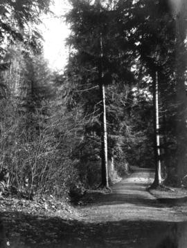 Bicycle path - Stanley Park