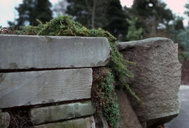 Landscape - detail : stonewall and planting