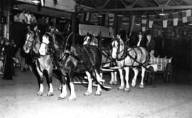 Four-horse team and wagon owned by W. Shepherd of Richmond, B.C.