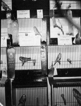 Display of prize-winning caged birds