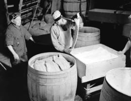 Packing Salmon into barrels
