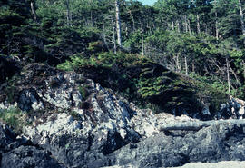 Habitat : Ocean Cliffs, Long Beach Vancouver Island, B.C.