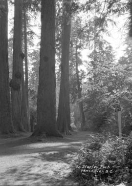 [Trail through trees] in Stanley Park