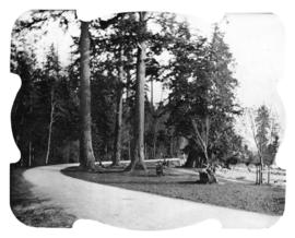 [Trail along beach in Stanley Park]