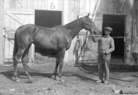 [Horse and handler at stables]