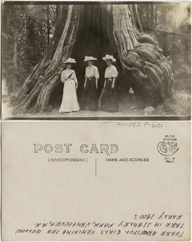[Three beautiful girls admiring the hollow tree in Stanley Park, Vancouver, B.C.]