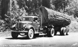 Hauling a Forest Giant in Oregon
