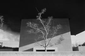 City tree II