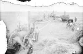 Threshing on the farm of J.R. Neff, Esq., Moosamin, Assa