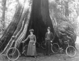 [Bicyclists in front of the Hollow Tree]