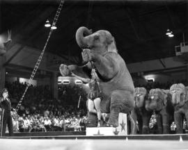 Elephant and circus performer in P.N.E.-Shrine Circus performance in P.N.E. Forum