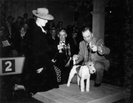 Trophy presentation at exhibition all-breed dog show [Fox Terrier]