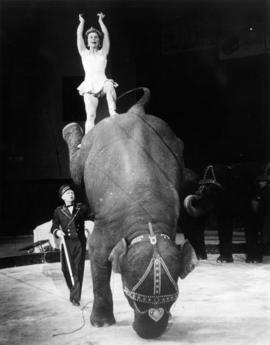 Besalou Elephants presented by Mack and Peggy Mac Donald : [publicity photo of circus performers ...