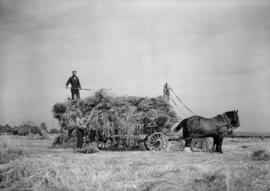 Agricultural harvesting backgrounds, loading racks and threshing