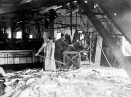 [Interior of a fish cannery]