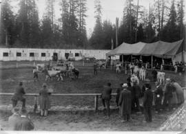 PNE show ring : [livestock ring on Vancouver Exhibition grounds]