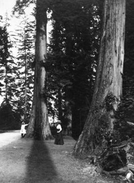 [Woman and girl looking at large tree in Stanley Park]