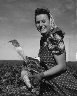 Woman in field holding freshly picked sugar beets