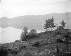 [Trees along shore of lake]