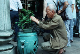 Penjing (Bonsai) Master at Work