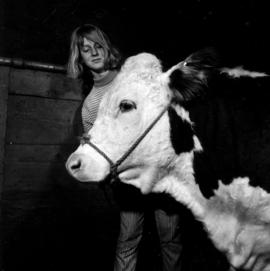 Girl with Hereford cattle