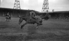 [Man riding a bucking horse at the Callister Park rodeo]
