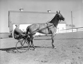 [A man in a harness-racing sulky at Ryan's Farm]