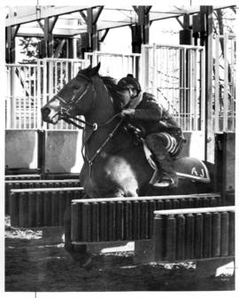 Colt racing from starting gate with rider Allan MacKenzie at Exhibition Park
