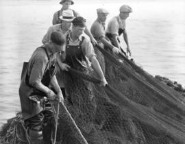 "Pulling in nets aboard seiner [""Cape Knox""]"