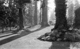 Shine & Shadow - an Idyllic Scene in the cleared spaces of Stanley Park