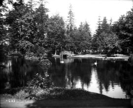 [Beacon Hill Park pond and swans]