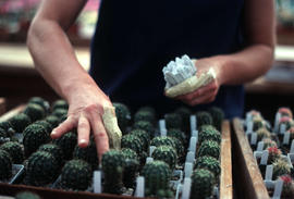 Propagation : labeling cactus seedlings