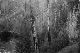 [Unidentified forest and stream]