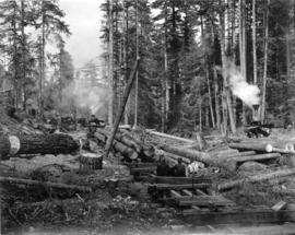 Logging - Getting Out the Raw Material