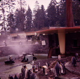 [Penguins in zoo at Stanley Park]