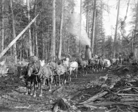 Logging in B.C. [near the Nicomekl River]