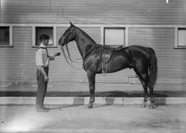 Man standing in front of a saddled horse