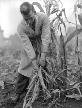 Bordeaux [Company employee tending plants]
