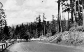 [Road leading to Second Beach at Stanley Park]