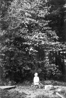 [Boy standing next to] Dogwood
