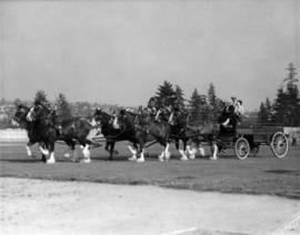 Six-horse team pulling M.T. Co. wagon