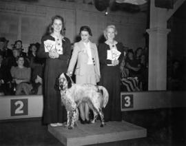Women standing with English Setter on display at exhibition all-breed dog show